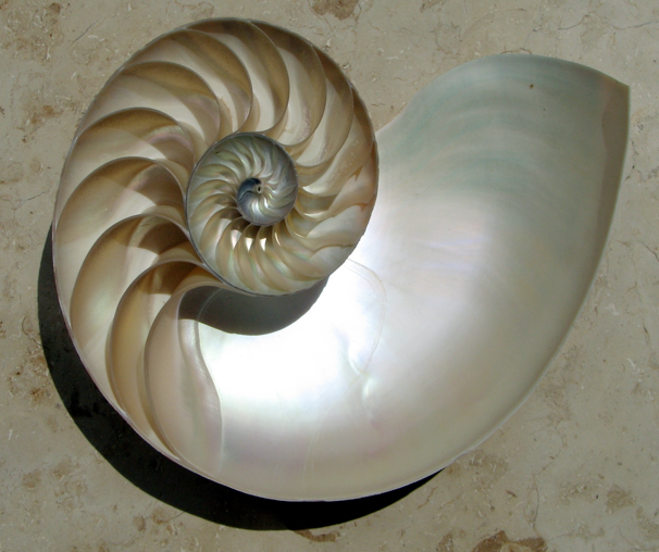 The logarithmic spiral of the Nautilus Shell
